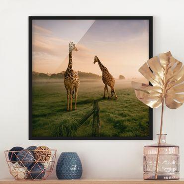 Poster con cornice - Surreal Giraffes - Quadrato 1:1