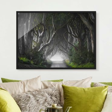 Poster con cornice - Forest In Northern Ireland - Orizzontale 3:4
