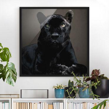 Poster con cornice - Black Puma - Quadrato 1:1