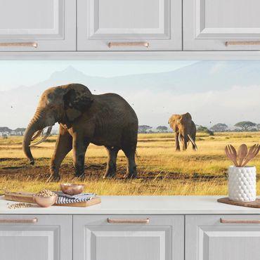 Rivestimento cucina - Elefanti Davanti Al Kilimanjaro In Kenya