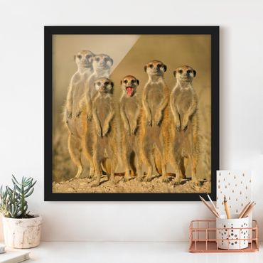 Poster con cornice - Meerkat Family - Quadrato 1:1