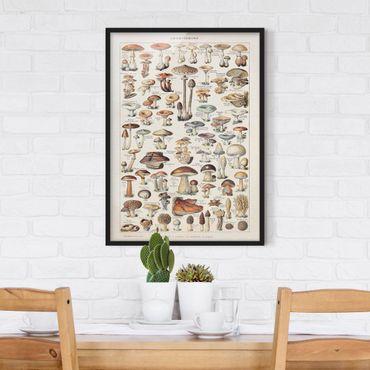 Poster con cornice - Funghi del Consiglio d'epoca - Verticale 4:3