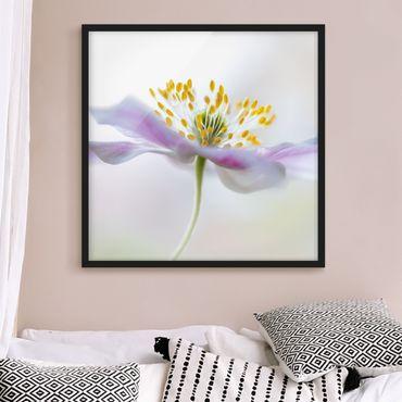 Poster con cornice - Windflower In White - Quadrato 1:1