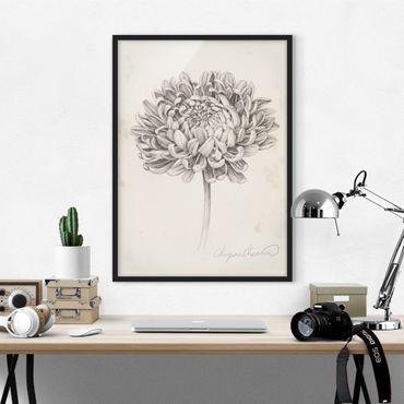 Poster con cornice - Botanical Study II Crisantemo - Verticale 4:3