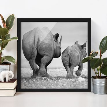Poster con cornice - Wandering Rhinos II - Quadrato 1:1