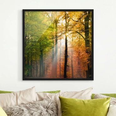 Poster con cornice - Morning Light - Quadrato 1:1