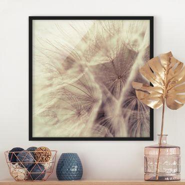 Poster con cornice - Detailed And Dandelion Macro Shot With Vintage Blur Effect - Quadrato 1:1