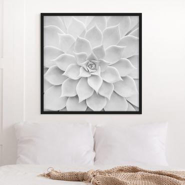 Poster con cornice - Cactus Succulent - Quadrato 1:1