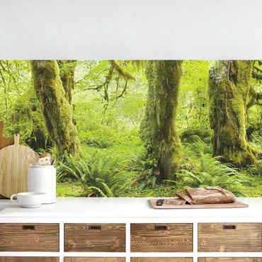 Rivestimento cucina - Hall Of Muschi Olympic National Park