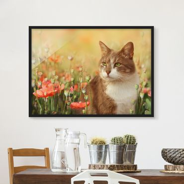Poster con cornice - Cat In A Field Of Poppies - Orizzontale 3:4