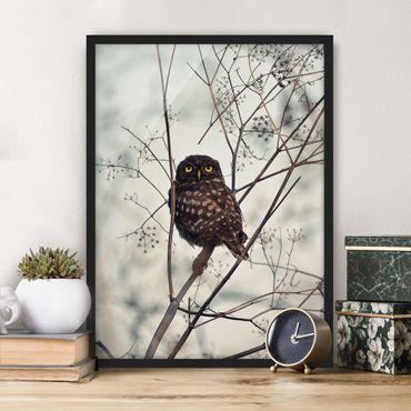 Poster con cornice - Gufo in inverno
