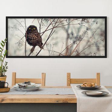 Poster con cornice - Gufo in inverno - Panorama formato orizzontale