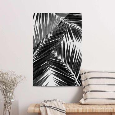 Quadro in vetro - Scorcio tra foglie di palme in bianco e nero