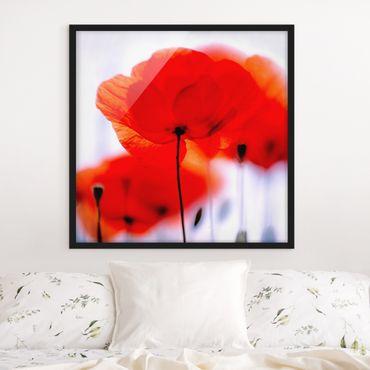 Poster con cornice - Magic Poppies - Quadrato 1:1