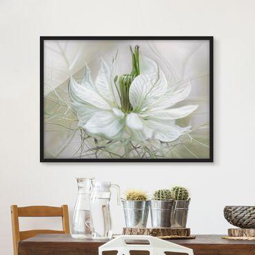 Poster con cornice - White Nigella - Orizzontale 3:4