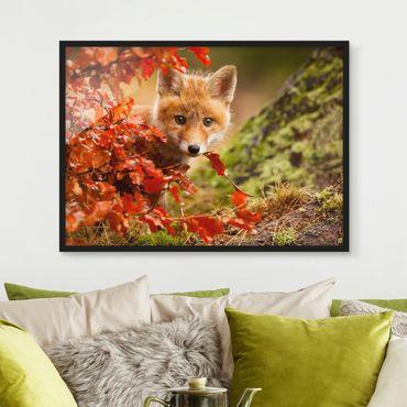 Poster con cornice - Fox In The Fall - Orizzontale 3:4