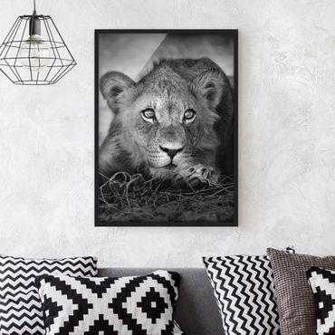 Poster con cornice - Lurking Lionbaby - Verticale 4:3