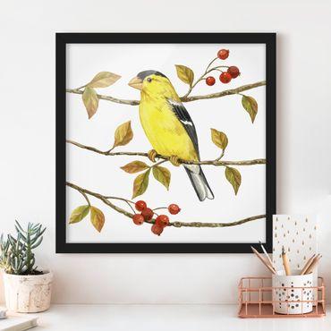 Poster con cornice - Birds And Berries - American Goldfinch - Quadrato 1:1