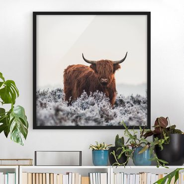 Poster con cornice - Bisonte Nelle Highlands - Quadrato 1:1