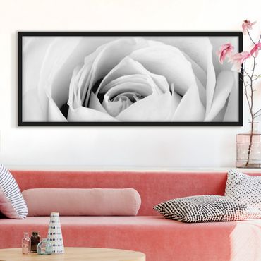 Poster con cornice - Close Up Rose - Panorama formato orizzontale