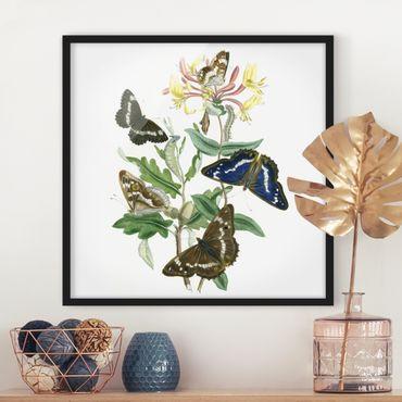 Poster con cornice - British Butterflies IV - Quadrato 1:1