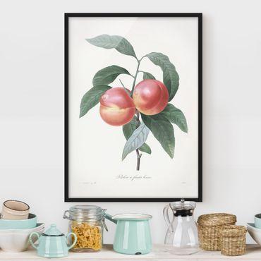 Poster con cornice - Botanica illustrazione d'epoca Peach - Verticale 4:3