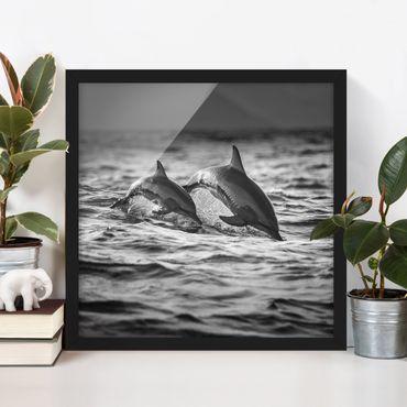 Poster con cornice - Due delfini che saltano - Quadrato 1:1