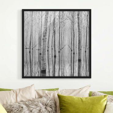 Poster con cornice - Birches In November - Quadrato 1:1