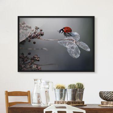 Poster con cornice - Ladybird On Hydrangea - Orizzontale 3:4