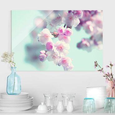 Quadro in vetro - Fiori di ciliegio colorati