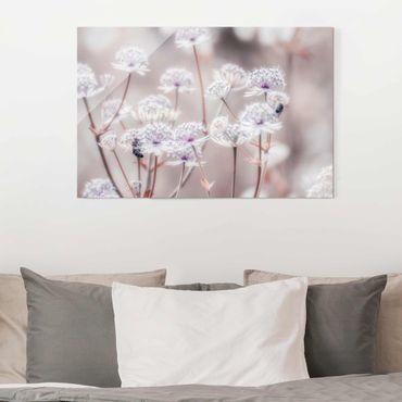 Quadro in vetro - Leggeri fiori selvatici