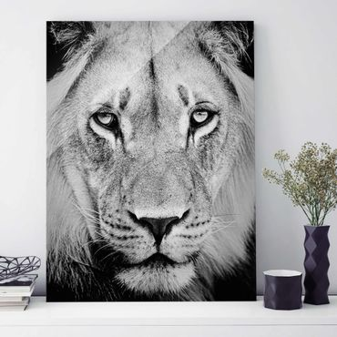 Quadro in vetro - Old lion - Verticale 3:4