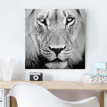 Quadro in vetro - Old lion - Quadrato 1:1