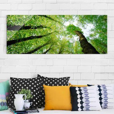 Quadro in vetro - Trees of life - Panoramico