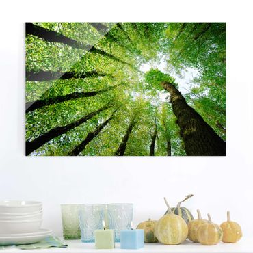 Quadro su vetro - Trees of life - Orizzontale 3:2