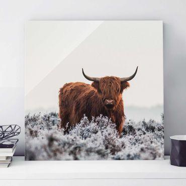 Quadro in vetro - Bisonte Nelle Highlands - Quadrato 1:1