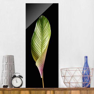 Quadro in vetro - Leaf Calathea Ornata On Black 03 - Pannello