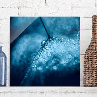 Quadro in vetro - Tarassaco Blu In The Rain - Quadrato 1:1