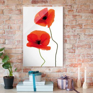 Quadro in vetro - Charming Poppies - Verticale 2:3