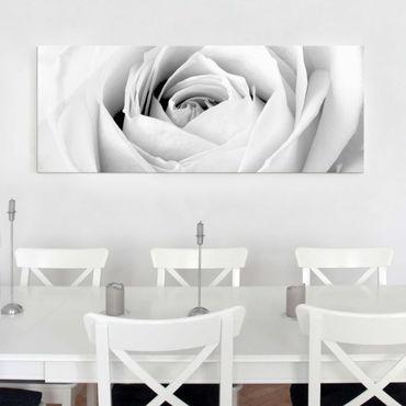 Quadro in vetro - Close Up Rose - Panoramico