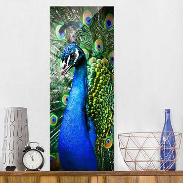 Quadro in vetro - Magnifico pavone - Pannello