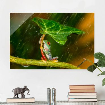 Quadro in vetro - Rana In The Rain - Orizzontale 3:2