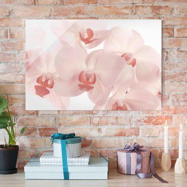 Quadro su vetro - Bright Orchid - Svelte Orchids - Orizzontale 3:2