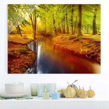 Quadro su vetro - Autumn Forest - Orizzontale 4:3