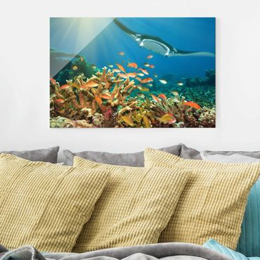 Quadro in vetro - Coral reef - Orizzontale 3:2