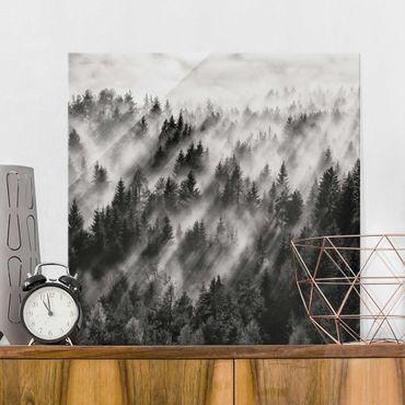 Quadro in vetro - Raggi Luce nella foresta di conifere - Quadrato 1:1