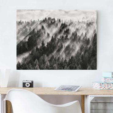 Quadro in vetro - Raggi Luce nella foresta di conifere - Large 3:4
