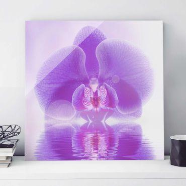 Quadro in vetro - Purple Orchid on water - Quadrato 1:1