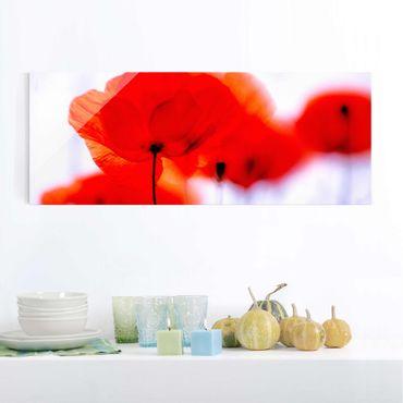 Quadro in vetro - Magic Poppies - Panoramico