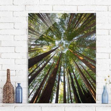 Quadro in vetro - Sequoia treetops - Verticale 3:4